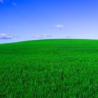 Микрогуматы и возможность получения экологически безопасной продукции растениеводства