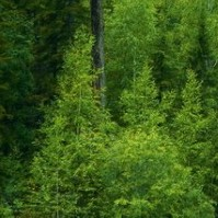 Значение лесов в экологическом балансе планеты