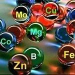 Удобрение на основе гуминовых кислот и микроэлементов «Терра Органик»